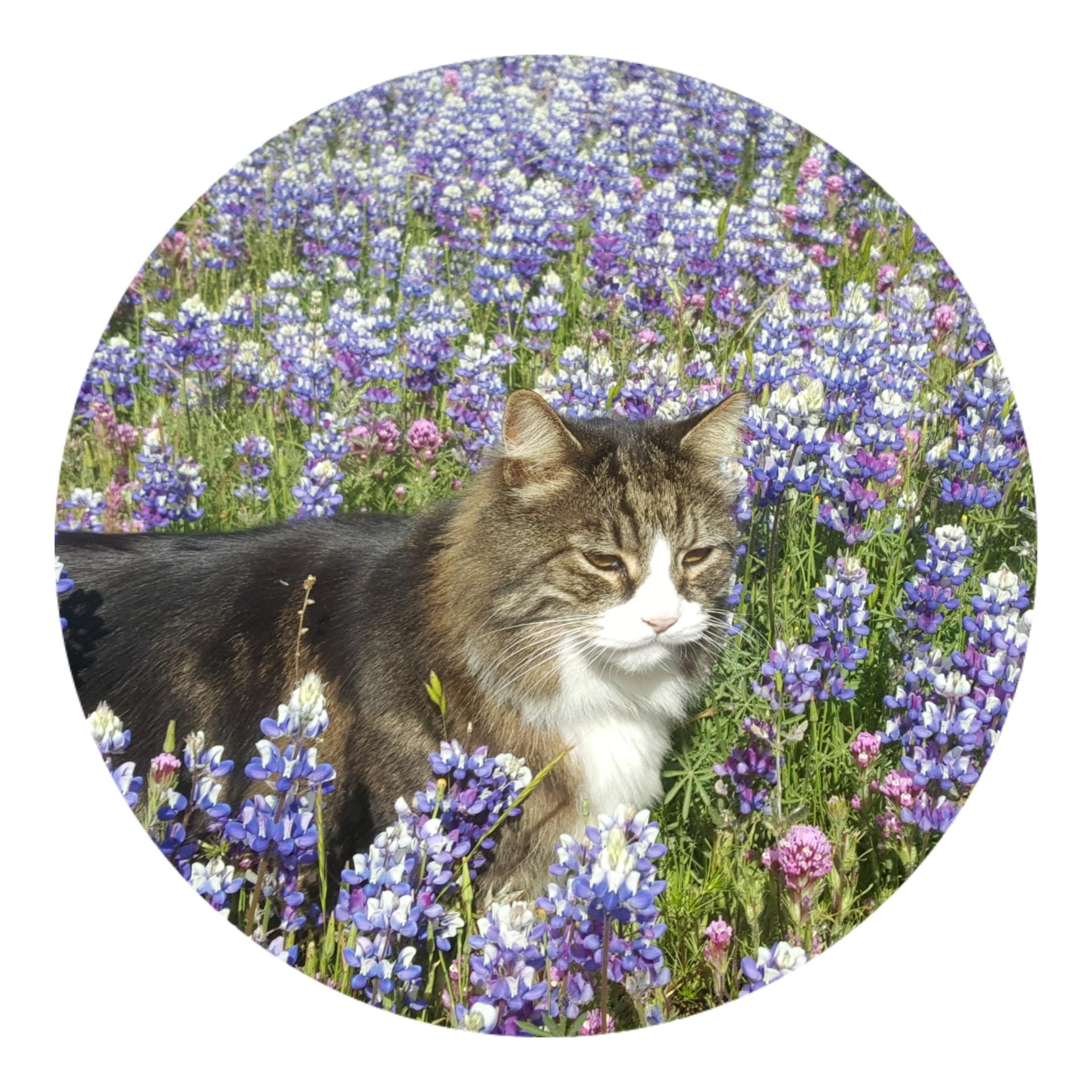 Briar Kitty